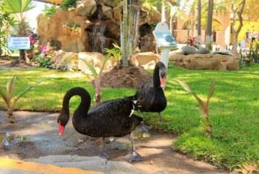 <center>Acuario Mazatlán sigue cautivando a los turistas y viajeros</center>