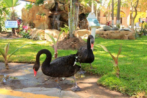 Acuario Mazatlán sigue cautivando a los turistas y