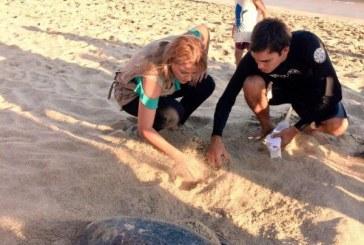 Extraordinaria temporada 2017 de anidación de tortuga
