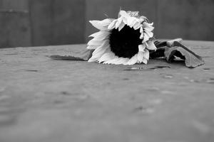 Anedonia: il sintomo complesso della depressione che ha portato al suicidio il figlio di Lory Del Santo