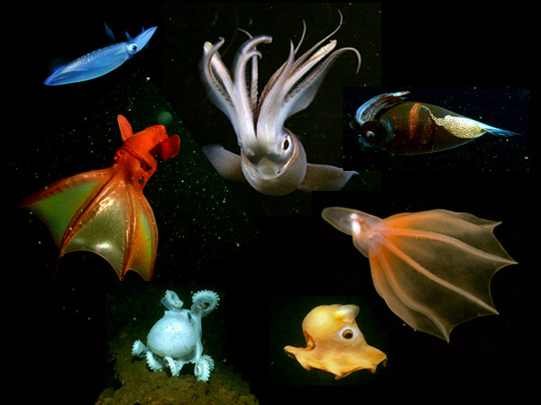 Celebrating Cephalopods Mbari