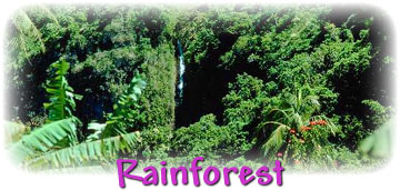 Examples of parasitism in the rainforest include loa loa, candiru, rafflesia, leeches, and the fungus ophiocordyceps unilateralis, among others. Types Of Rainforests