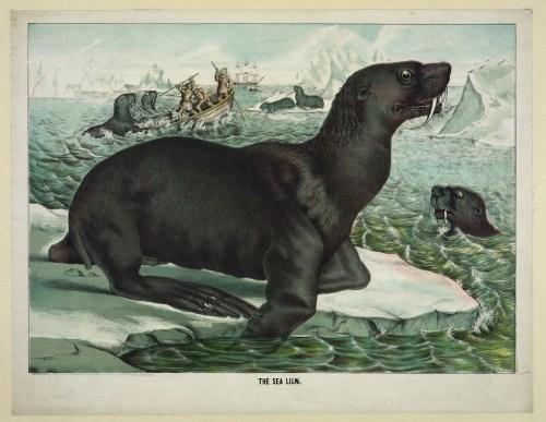 Print-SealLion-1874
