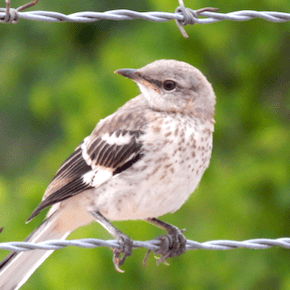 Mockingbird on a Wire: Grace Across the Church Divide