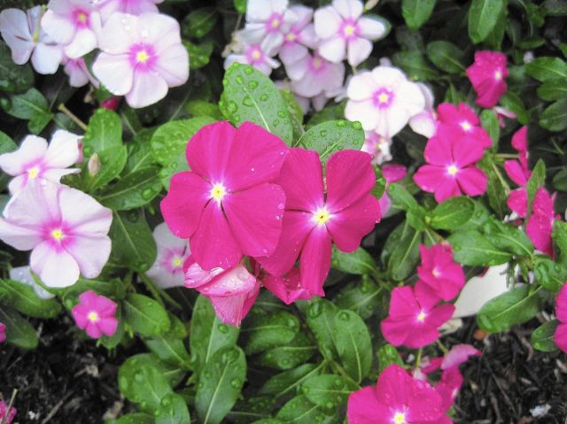 Help for Gardeners: Reader asks about starting flower plants from seed -  The Morning Call