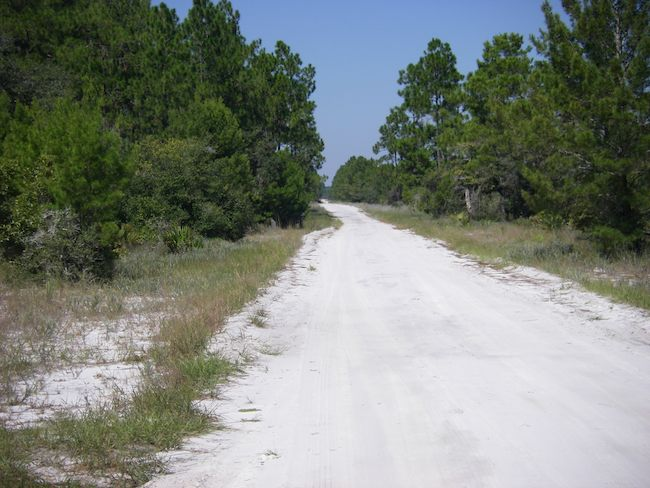 white sand road in Florida