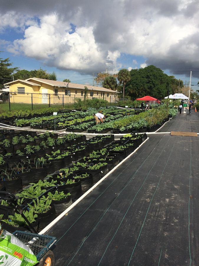 Community Garden, Dania Beach Florida