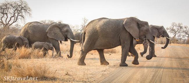 Kruger, South Africa by Shara Johnson of SKJTravel.net