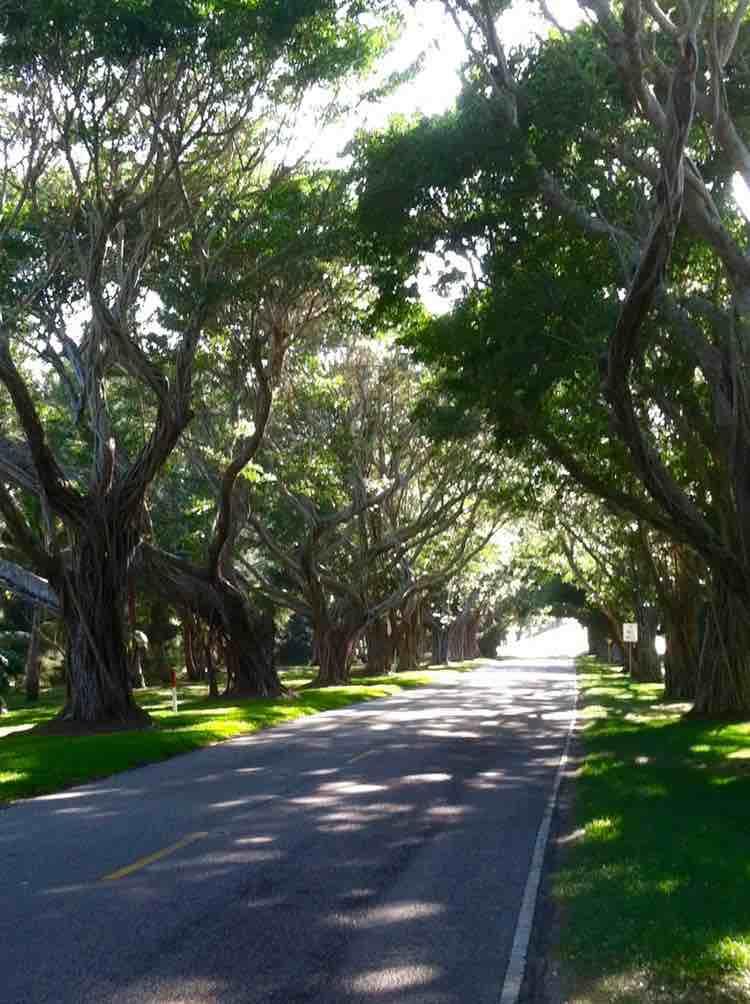 oak tree lined street on Jupiter Island Florida
