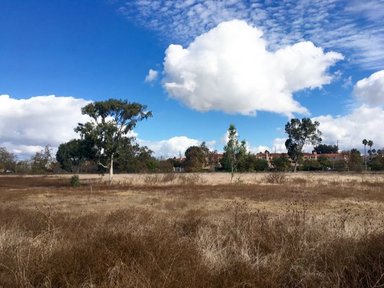 a fun place to visit in Los Angeles is Madrona Marsh Preserve