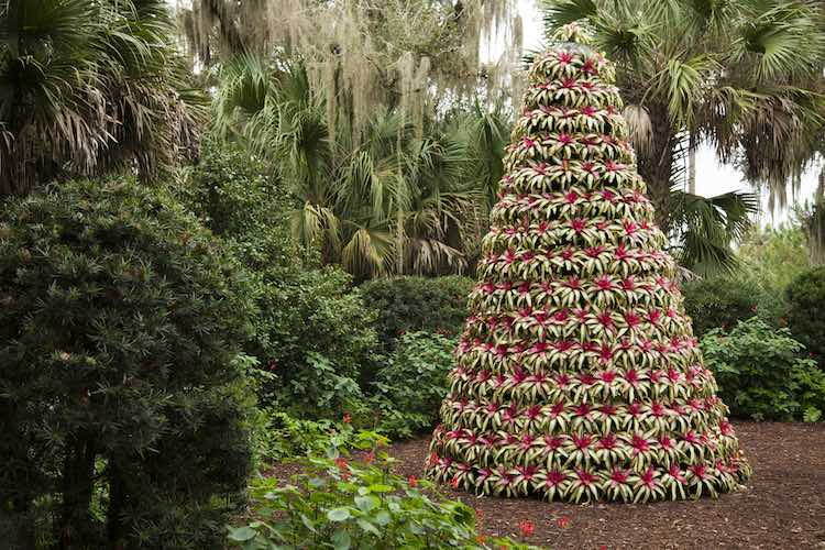 Bromeliad Christmas Tree at Bok Tower Gardens