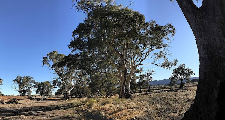 walking tours in Australia: Arkaba Walk. Article by Victoria Lim for McCool Travel