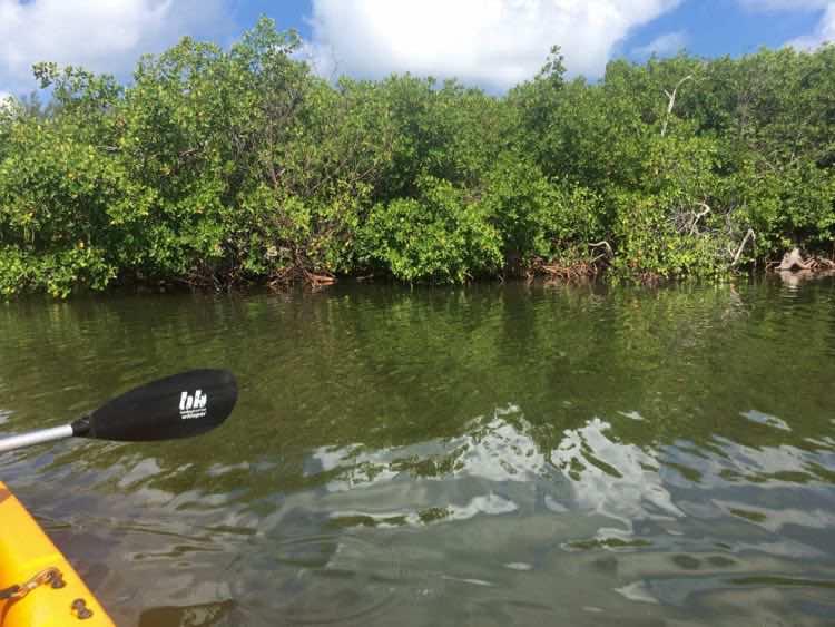 US luxury resorts with water sports: South Seas Island Resort Captiva