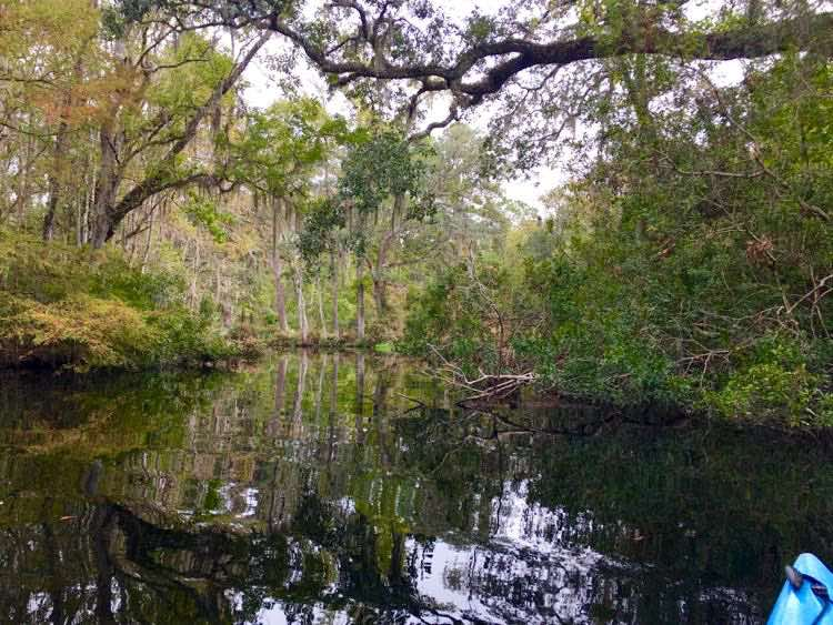 Loften Creek Florida with Amelia Island Kayak Adventures