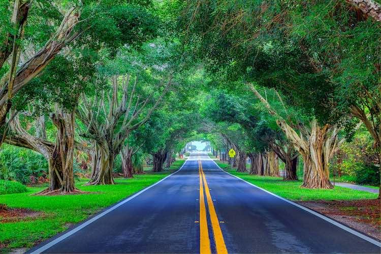 tunnel of trees across Bridge Road