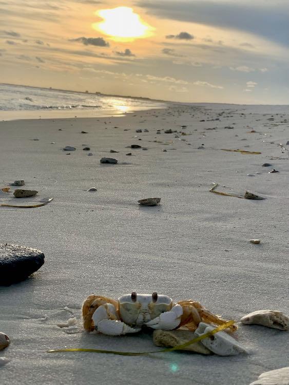 Gulf Coast sunset with crab