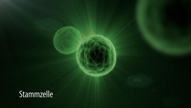 Stammzelle