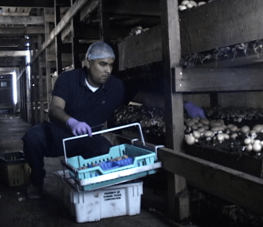Kaolin Farms raid