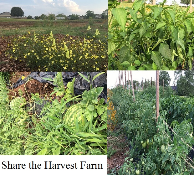The crops are growing nicely and more is planted to help the hungry in our area.