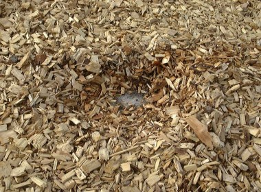 Wood chips, a common type of biomass. (biomassmagazine.com)