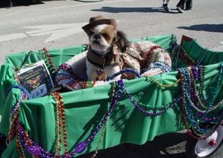 Dog Parade Photo