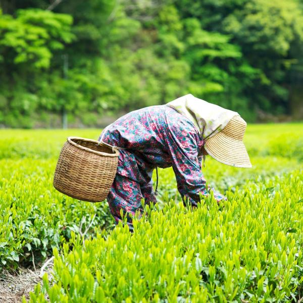 Strengthening Japanese agriculture to maximize global reach   McKinsey