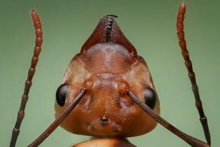 queen-ant-1193472_960_720