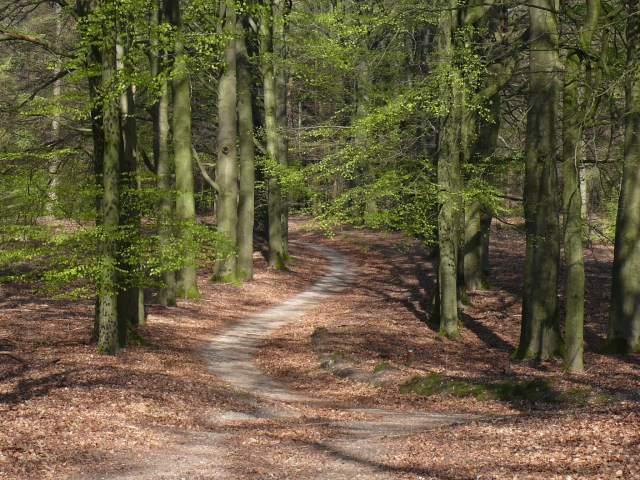 Het pad dat naar links afboog: over onzekerheid