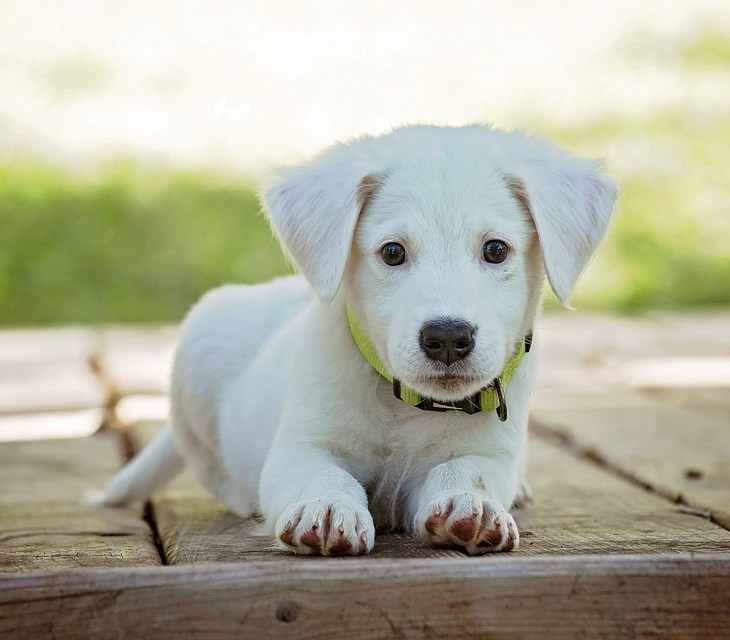 puppy with collar