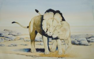 A water colour painting of two lions by Keith Cains.