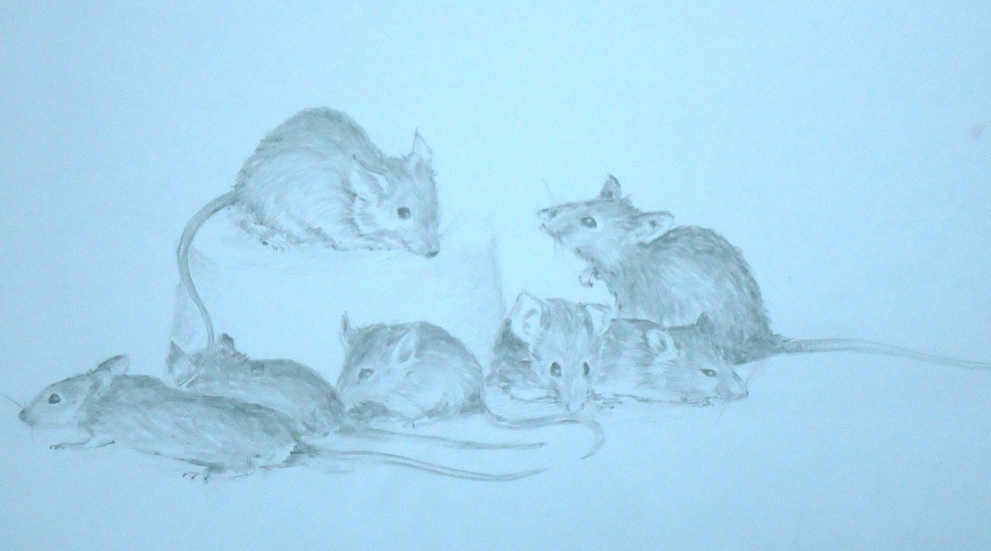 A pencil sketch of seven mice by Keith Cains.