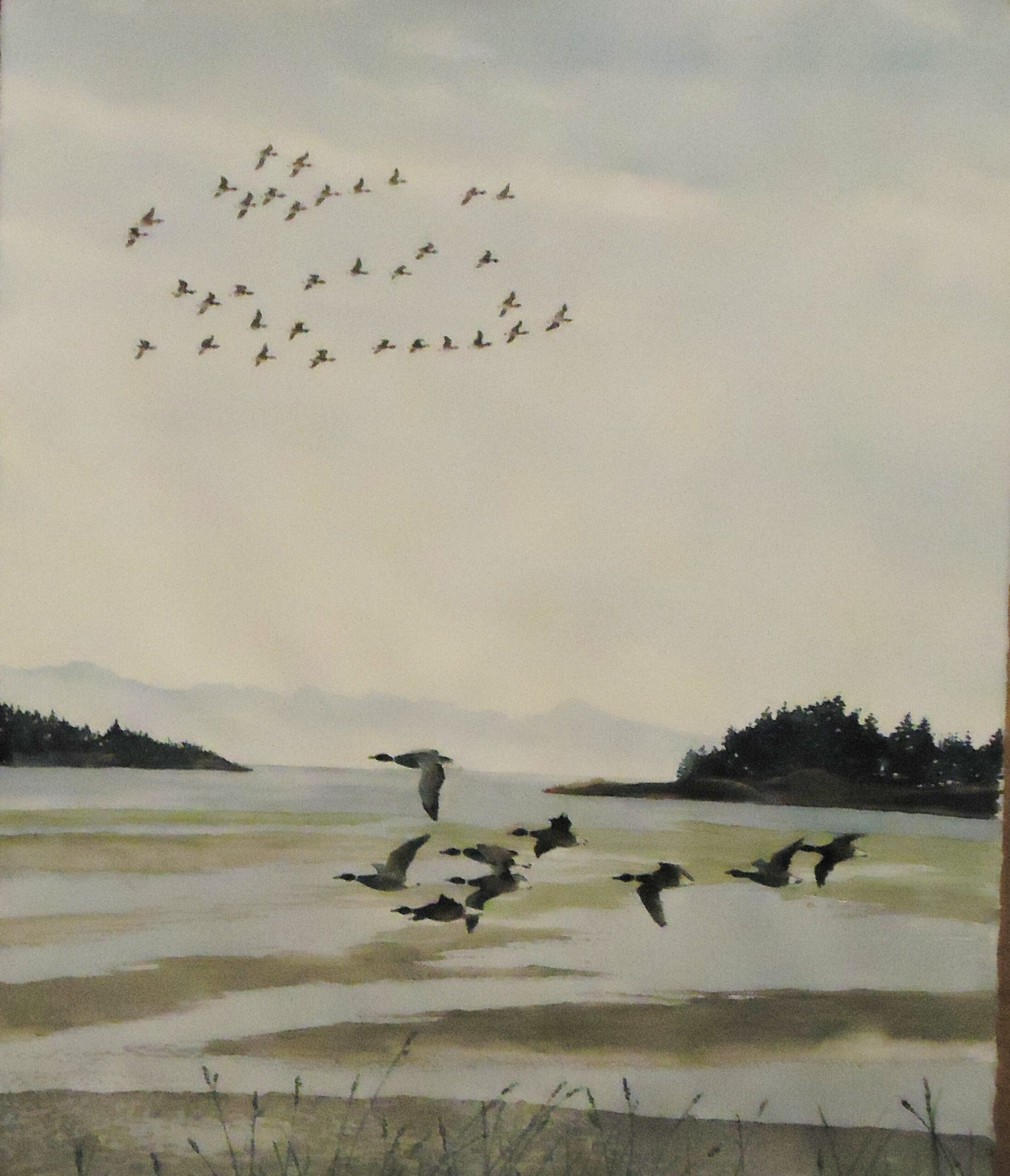 A water colour painting of some Brandt geese flying low over a sandy shore with additional geese flying high in the sky by Keith Cains.