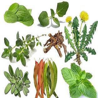 healing herbs2
