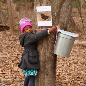 maple_sugaring_days