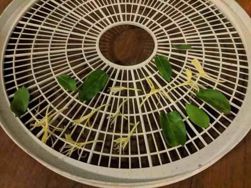 drying honeysuckle