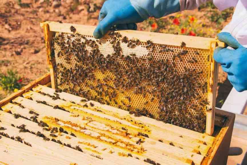 Beekeeping in Your Backyard