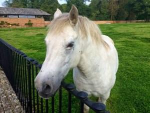 horse friend