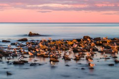 A long exposure of gulls, lit by the setting sun in a pastel landscape in Acadia National Park, Mount Desert Island, Maine.