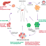 Cells Free Full Text Stem Cell Therapy For Diabetes Beta Cells Versus Pancreatic Progenitors