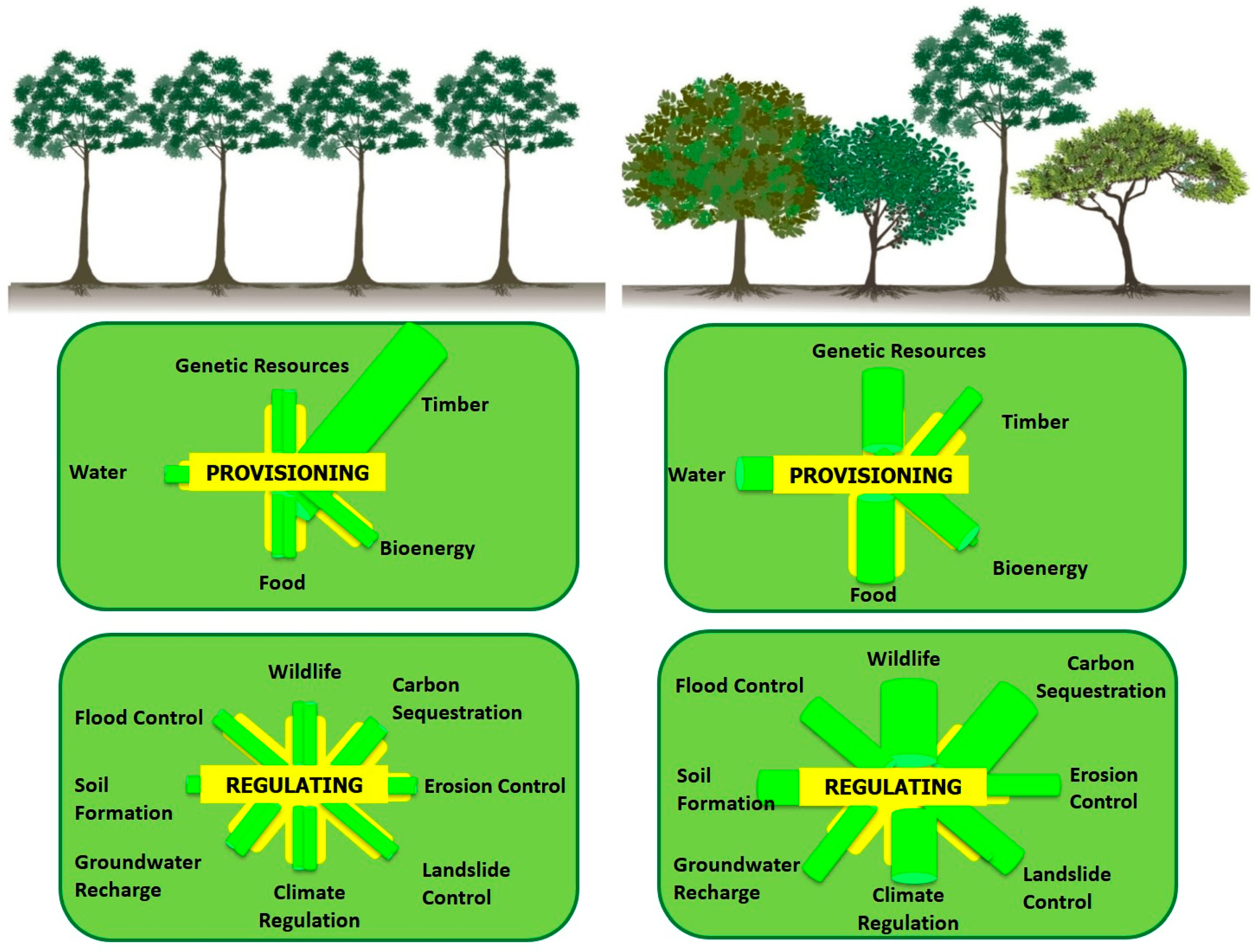 Northern temperate forests are often composed of deciduous trees that drop their leaves each year, providing a supply of rich nutrients to animals and plants as. Forests Free Full Text Tropical And Highland Temperate Forest Plantations In Mexico Pathways For Climate Change Mitigation And Ecosystem Services Delivery Html