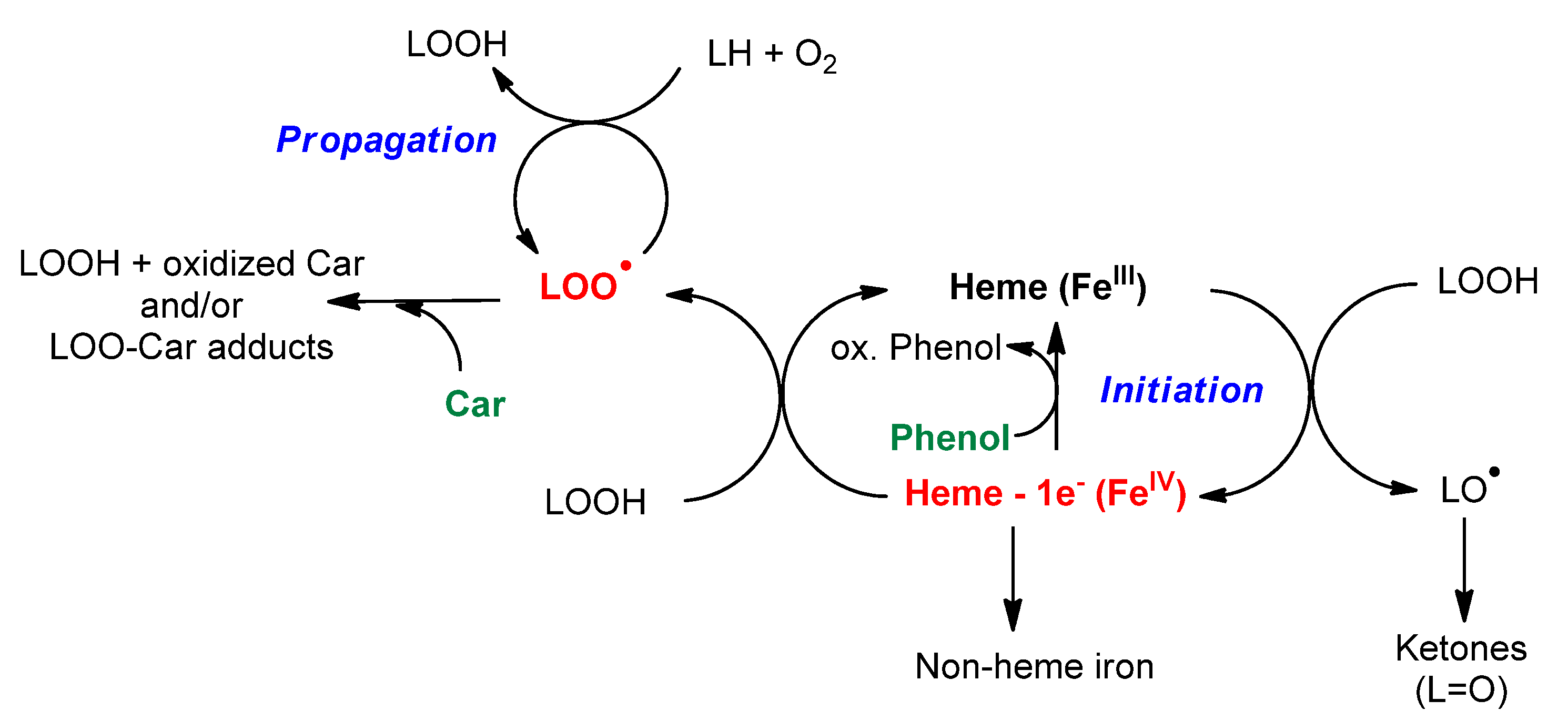 Beta Oxidation Products