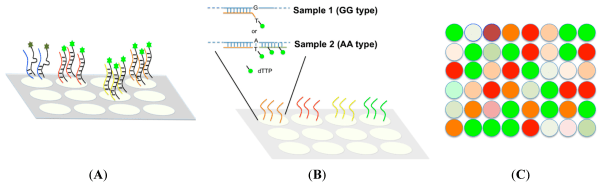 Microarrays | Free Full-Text | Efficient SNP Discovery by ...