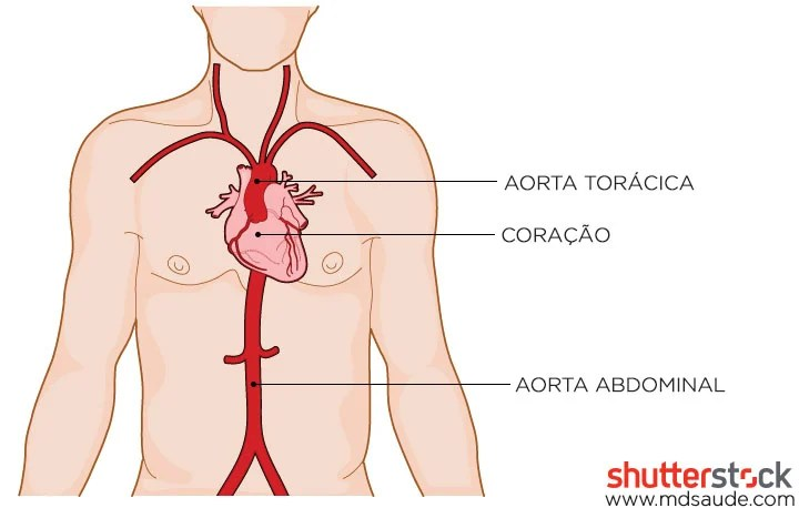 Artéria aorta