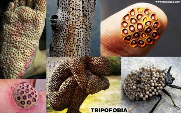 Imagens tripofobia