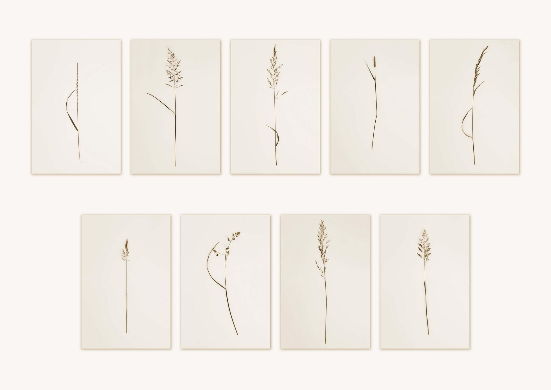 Fashionistic Grasses