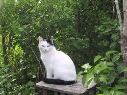 cat pictures4