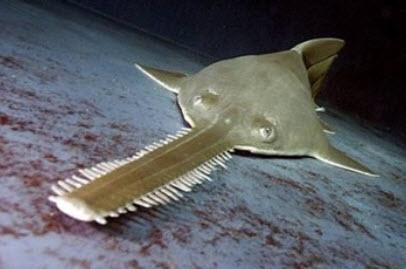 boathouse sawtooth fish