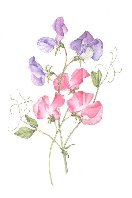 Miss April sweet pea flowers