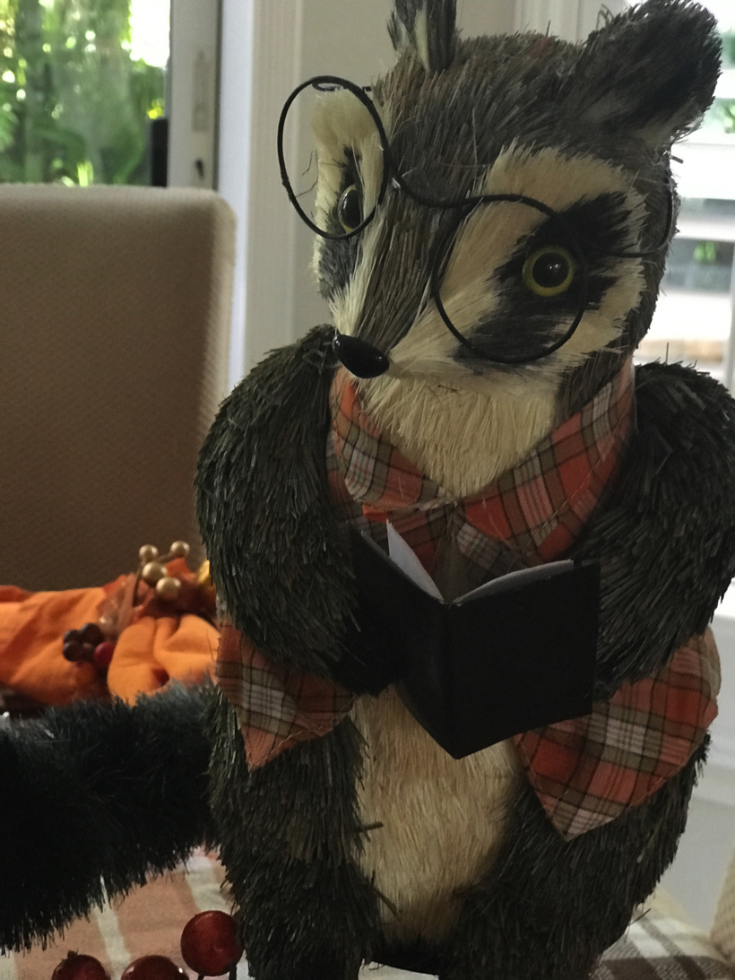 reading raccoons