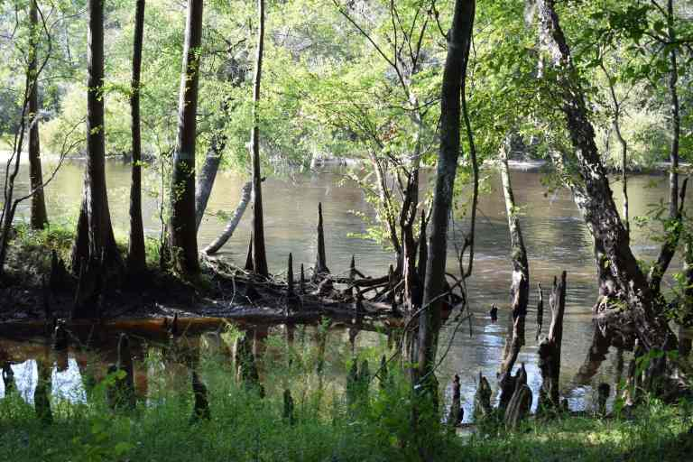 A Complete Guide to Colleton State Park